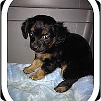 Adopt A Pet :: Maxie - Playa Del Rey, CA