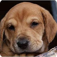 Adopt A Pet :: Alyssa Kay - Portland, OR