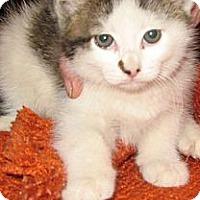 Adopt A Pet :: Blynk'n - Dallas, TX