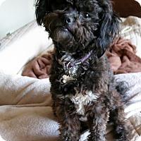 Adopt A Pet :: Skylar - Los Angeles, CA