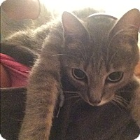 Adopt A Pet :: Lily_Courtesy Post - Columbia, MD