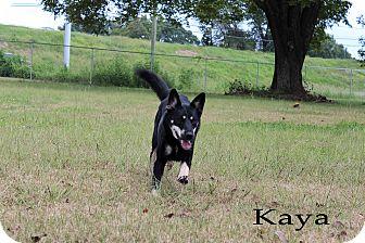 Shepherd (Unknown Type) Mix Dog for adoption in Texarkana, Arkansas - Kaya