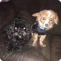 Adopt A Pet :: Toby - Parsippany, NJ