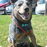 Adopt A Pet :: Dusty - Meridian, ID