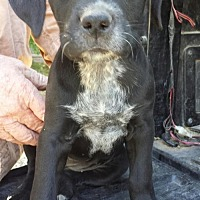 Adopt A Pet :: Emilee - Olympia, WA