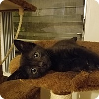 Adopt A Pet :: Rosa - Valley Village, CA