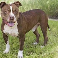 Adopt A Pet :: CAPTAIN - Los Angeles, CA