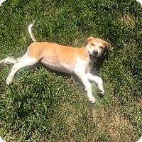 Adopt A Pet :: Luna - Columbia, SC