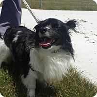 Adopt A Pet :: Miles - Lake Odessa, MI