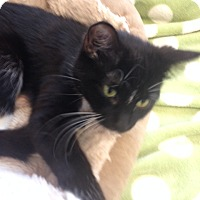 Adopt A Pet :: Chickadee - Cloquet, MN