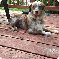 Adopt A Pet :: Xena 3011 - Toronto, ON