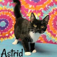 Adopt A Pet :: Astrid - Melbourne, KY
