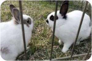 Other/Unknown Mix for adoption in Maple Shade, New Jersey - Lacey and Sarah