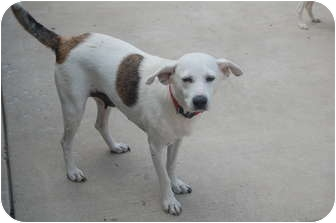 Terrier (Unknown Type, Medium) Mix Dog for adoption in Hainesville, Illinois - Molly