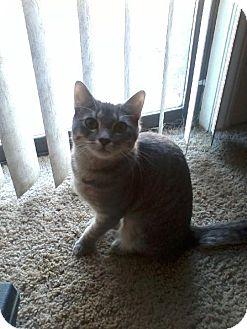 Domestic Shorthair Cat for adoption in Tehachapi, California - L'oreal