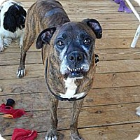 Adopt A Pet :: Chandler - Arden, NC