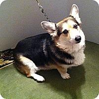 Adopt A Pet :: Jackson - Murfreesboro, TN