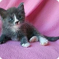 Adopt A Pet :: Bonnie Blue - Phoenix, AZ