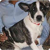 Adopt A Pet :: Cassie - Sandston, VA