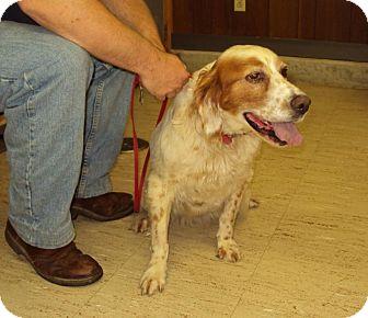Setter (Unknown Type) Mix Dog for adoption in Mt. Vernon, Illinois - Yukon