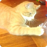 Adopt A Pet :: Cosmo - St. Louis, MO