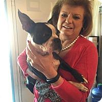 Adopt A Pet :: Bo - Weatherford, TX