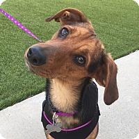 Adopt A Pet :: Addy - San Diego, CA