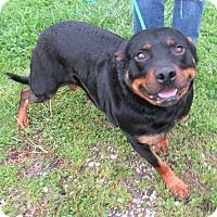 Adopt A Pet :: Titi - Reeds Spring, MO