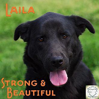 Labrador Retriever Mix Dog for adoption in Washburn, Missouri - Laila