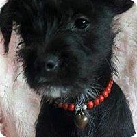Adopt A Pet :: Lisa - San Diego, CA