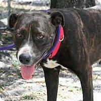 Adopt A Pet :: LJ - Bradenton, FL