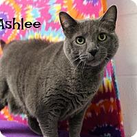 Adopt A Pet :: Ashlee - Melbourne, KY