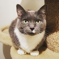 Adopt A Pet :: Babe - Hastings, MN