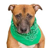 German Shepherd Dog Mix Dog for adoption in Orlando, Florida - *COOPER