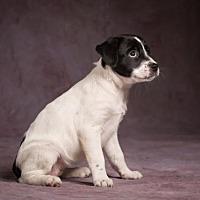 Adopt A Pet :: Maxie - League City, TX