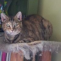 Adopt A Pet :: Sheba - Columbus, OH