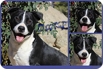 Border Collie Mix Dog for adoption in Pittsburgh, Pennsylvania - Duke