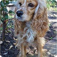 Adopt A Pet :: Lexie - Sugarland, TX