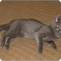Adopt A Pet :: Jasper - New York, NY