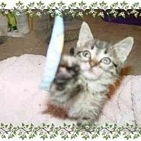 Adopt A Pet :: Glitter - KANSAS, MO