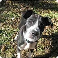 Adopt A Pet :: Snoopy - Savannah, GA