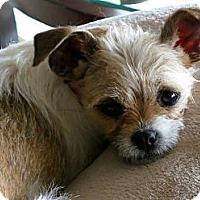Adopt A Pet :: Izzie - Los Angeles, CA