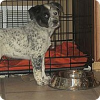 Adopt A Pet :: Captain Teague - Oak Creek, WI