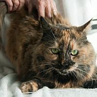 Adopt A Pet :: Hazel - Palm Desert, CA