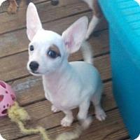 Adopt A Pet :: Junior - Coral Springs, FL