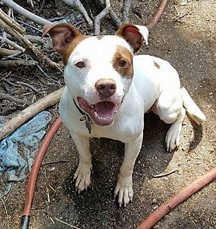 Terrier (Unknown Type, Medium) Mix Dog for adoption in Detroit, Michigan - Podrick