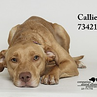 Adopt A Pet :: Callie  (Foster Care) - Baton Rouge, LA