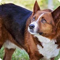 Adopt A Pet :: Maxwell - Pryor, OK
