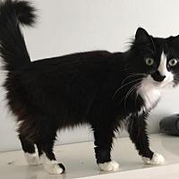 Adopt A Pet :: Mischief - Hamilton, ON