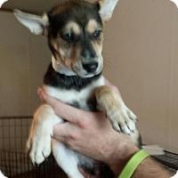 Adopt A Pet :: Delilah - Olympia, WA